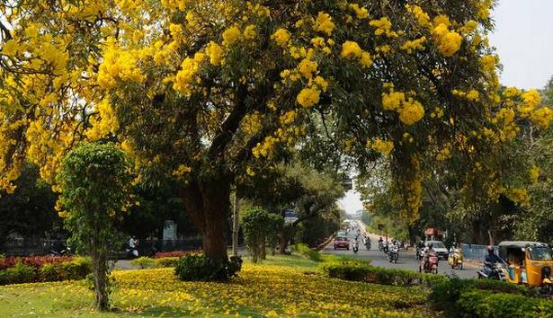 Hyderabad recognized as 'Tree City' by international body