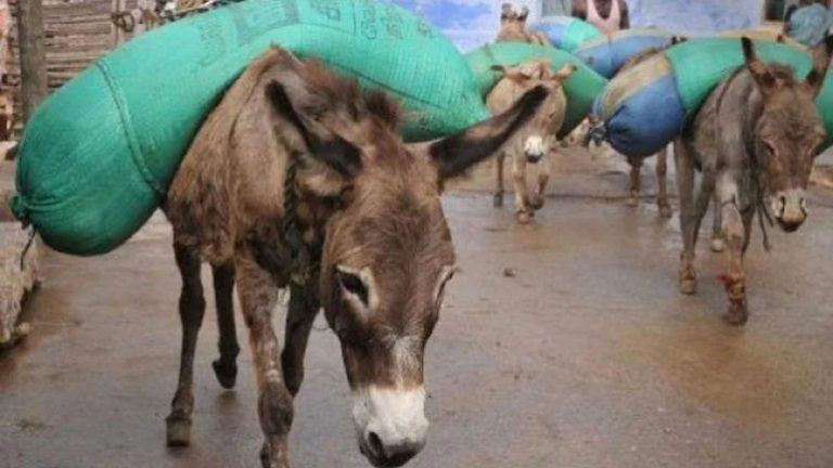 Donkey Meat most sought after in Andhra Pradesh over sex drive enhancing claims